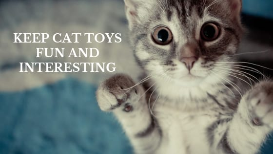 keep cat toys fun and interesting