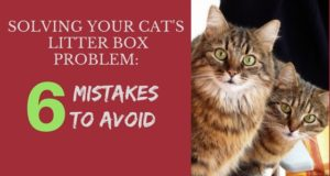 solving your cat's litter box problem