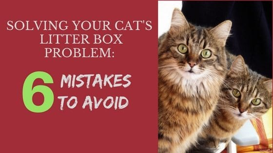 Cat Litter Box | How to Solve a Litter Box Problem