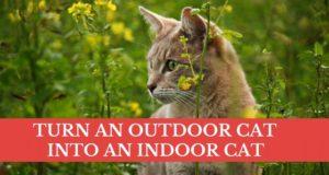 turn an outdoor cat into an indoor cat