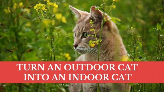 turn an outdoor cat into an indoor cat