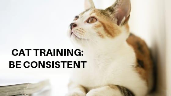 cat training: be consistent