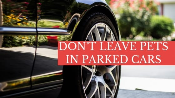don't leave pets in parked cars