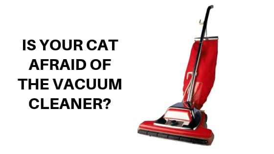 is your cat afraid of the vacuum cleaner