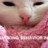 wool sucking behavior in cats