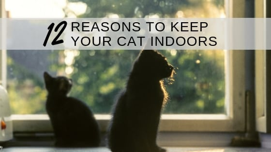 12 reasons to keep your cat indoors