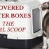 covered litter boxes: the real scoope