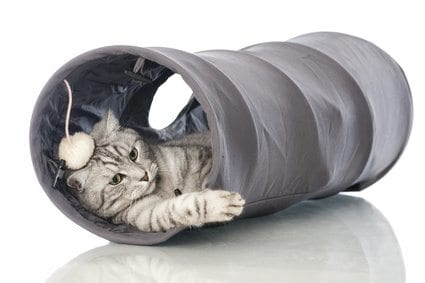 cat playing in a fabric tunnel