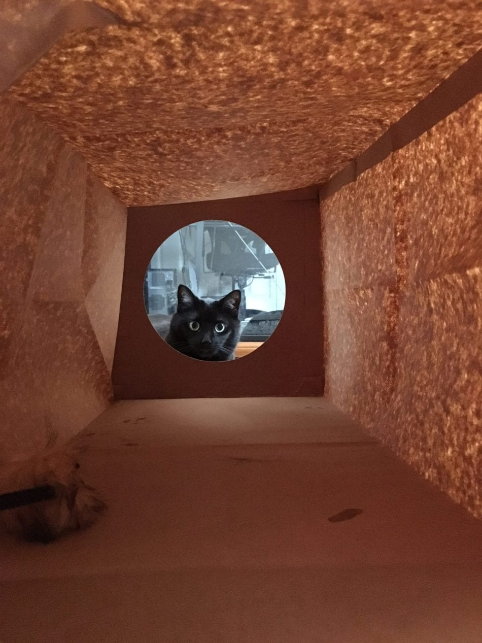 black cat peeking into a paper bag tunnel