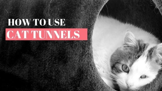 how to use cat tunnels