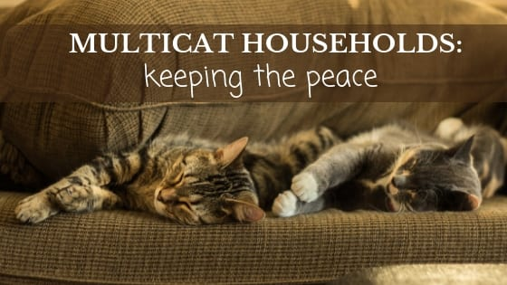 multicat cat households: keeping the peace