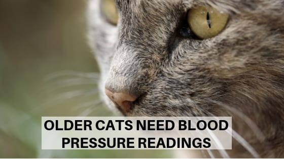 Why Older Cats Need Blood Pressure Readings