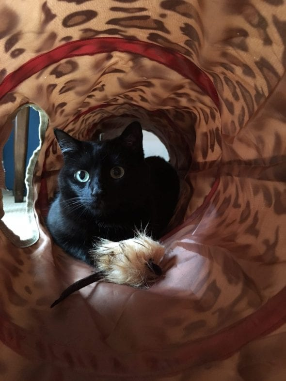 Pearl in tunnel with toy