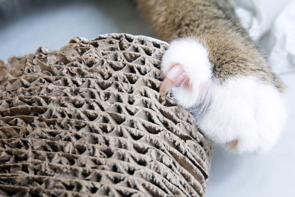 cat's claws on scratching post