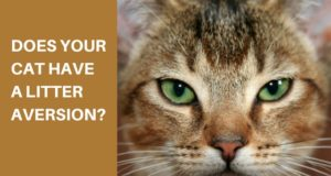 does your cat have a litter aversion
