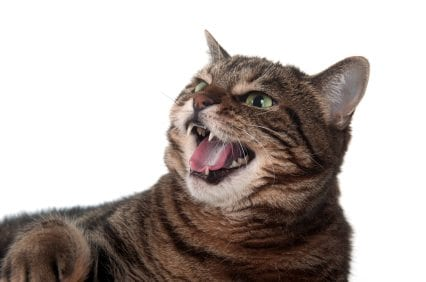 Cat S Safe Mdoe