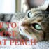 how to choose a cat perch