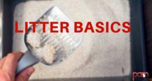 litter basics