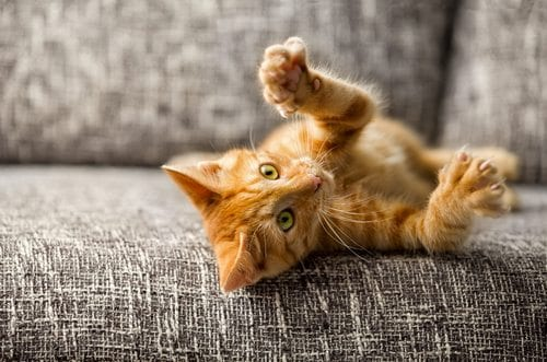 kitten playing on a sofa