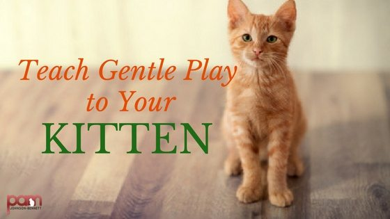 teach gentle play to your kitten