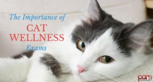the importance of cat wellness exams