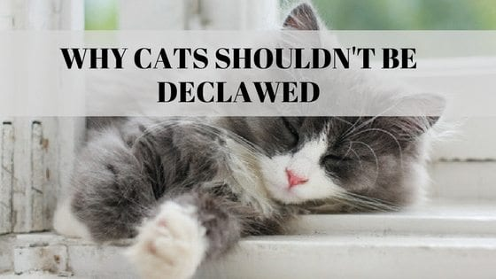why cats shouldn't be declawed