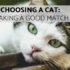 choosing a cat: making a good match