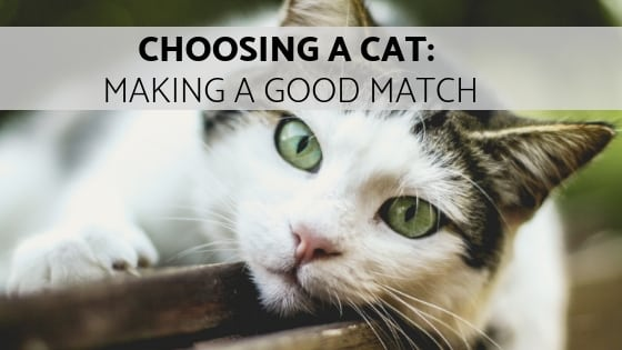 choosing a cat: making a good match