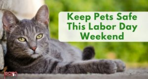 keep pets safe this labor day weekend