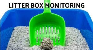litter box monitoring
