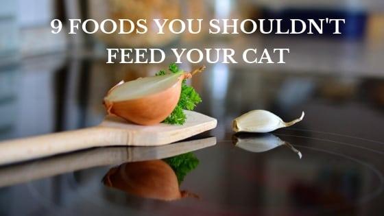 Nine Foods To Avoid Feeding Your Cat Proper Cat Feeding
