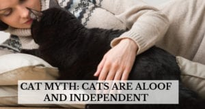 cat myth cats are aloof and independent
