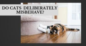 do cats deliberately misbehave