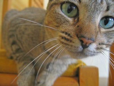 cat close-up