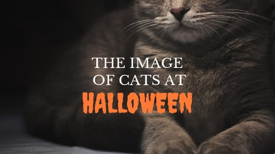 the image of cats at halloween