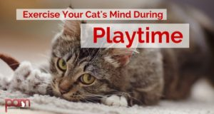 exercise your cat's mind during playtime