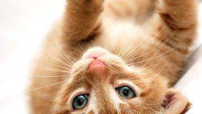 playful kitten on his back