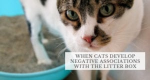 when cats develop negative associations with the litter box