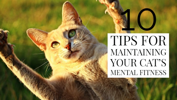 10 tips for maintaining your cat's mental fitness