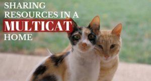 Cat Issues Solved By Pam Johnson Bennett