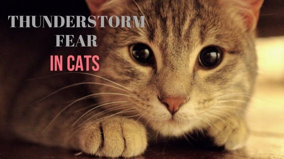 thunderstorm fear in cats