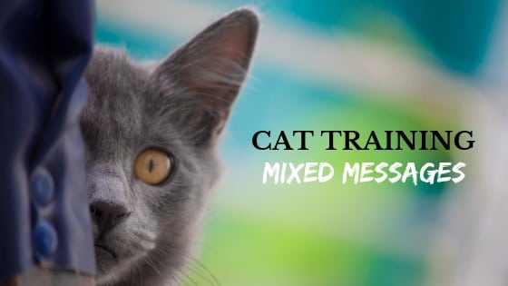 cat training mixed messages
