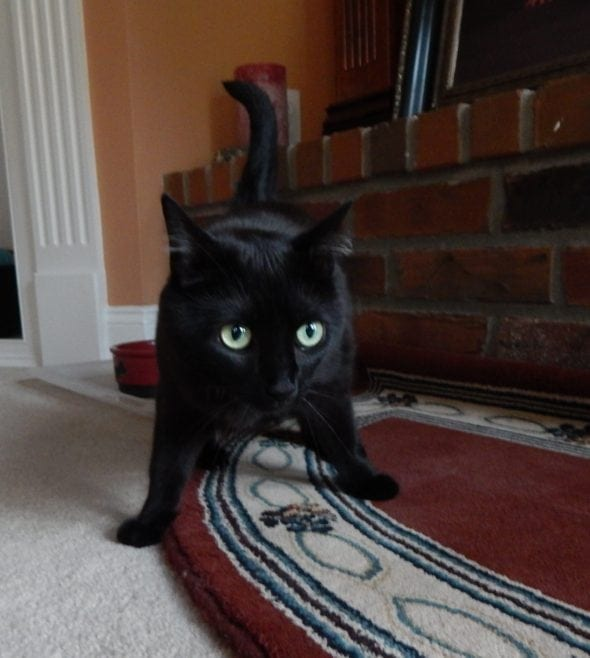 black cat with green eyes, standing on carpet