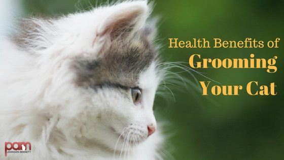 health-benefits-of-grooming-your-cat