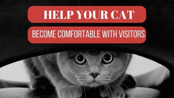 help your cat become comfortable with visitors