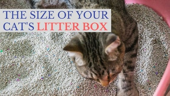 the size of your cat's litter box