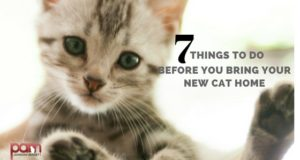 7 things to do before you bring your new cat home