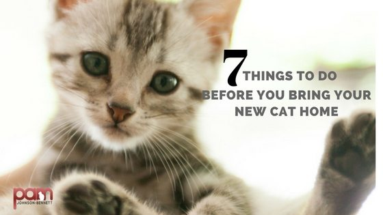 7-things-to-do-before-you-bring-your-new-cat-home