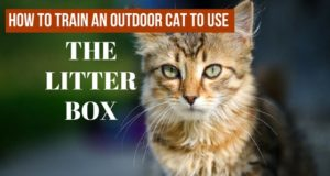 how to train an outdoor cat to use the litter box