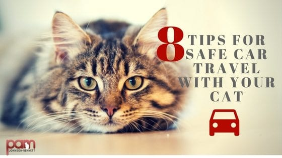 8 tips for safe car travel with your cat